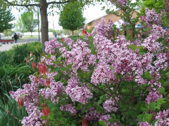 Pretty Purple Petals!