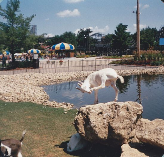 Goats of Olympus!