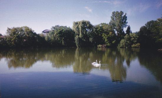 Birdie on Lake!