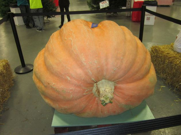 Giant Pumpkin!