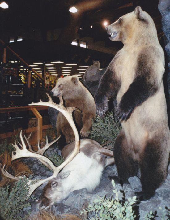Bear Taxidermy!