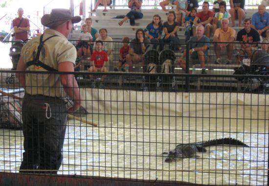 Man v. Gator!