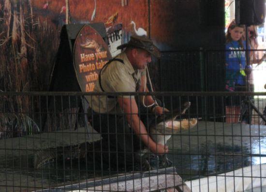 Alligator on Stage!