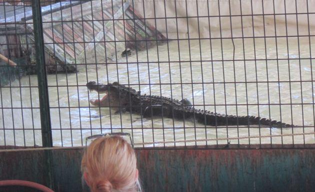 Gator back!