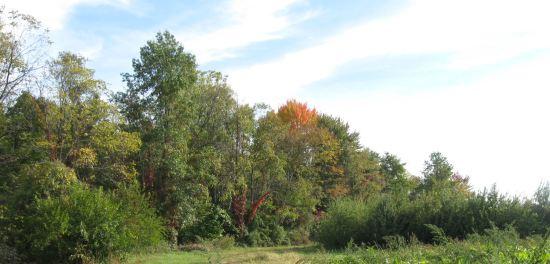 Fall! Autumn! Whichever!