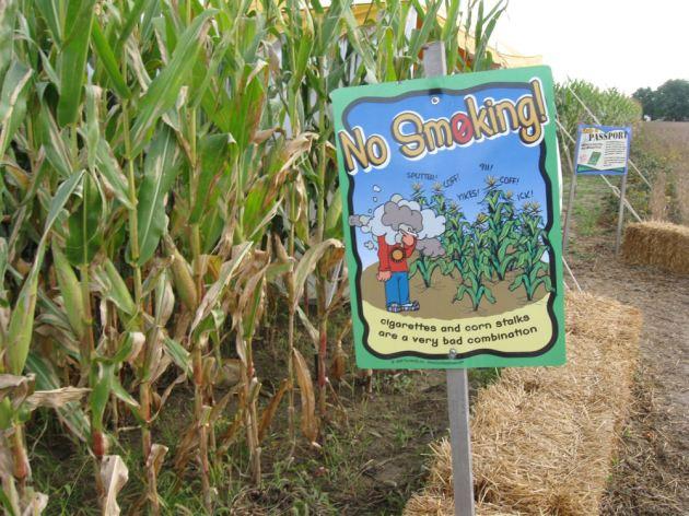 No-smoking corn maze!
