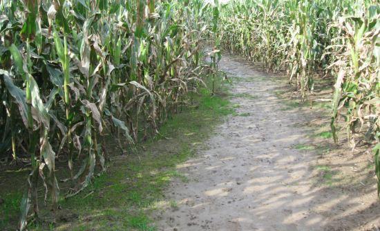 Corn curve.