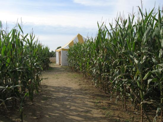 Corn tent.
