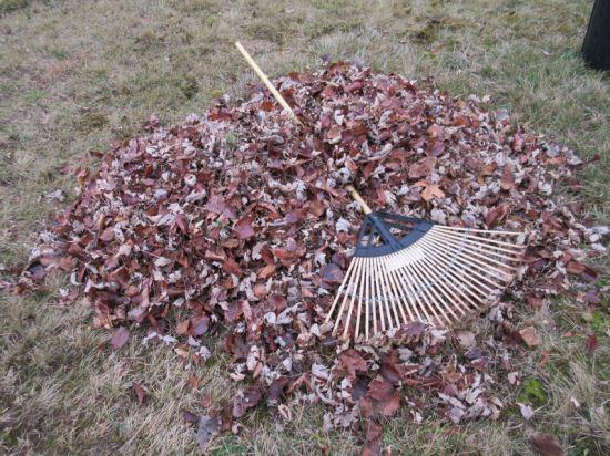 Raking Leaves!