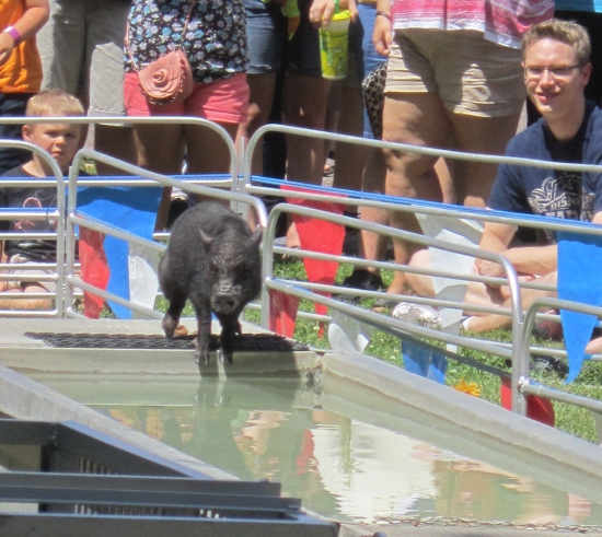 Water Pig!