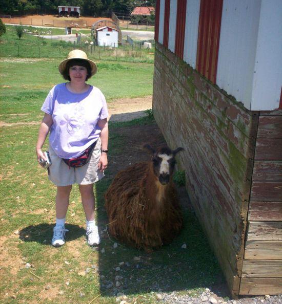 Free Llama!