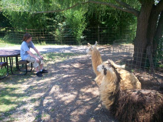 Llama Hangout!