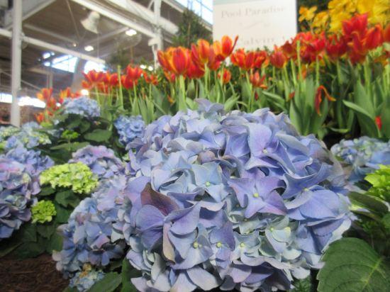 Light Purple Flowers!