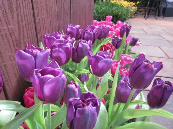 Purple's a Flower!