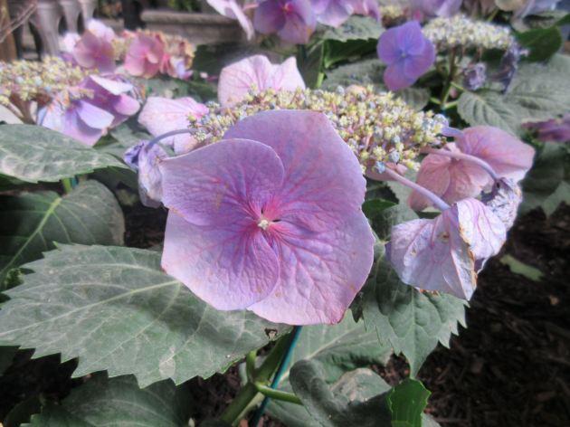 Lighter Purple Flowers!