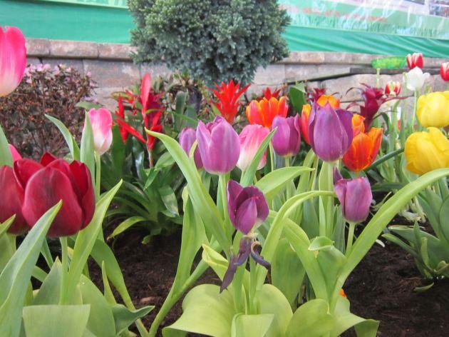 Many Splendored Flowers!