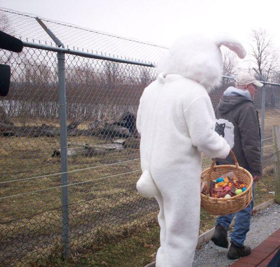 Dead Bunny Walking!