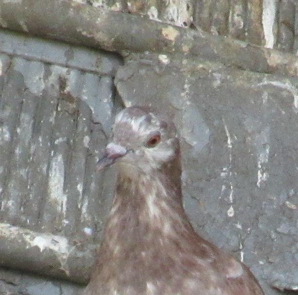 Suspicious Bird!