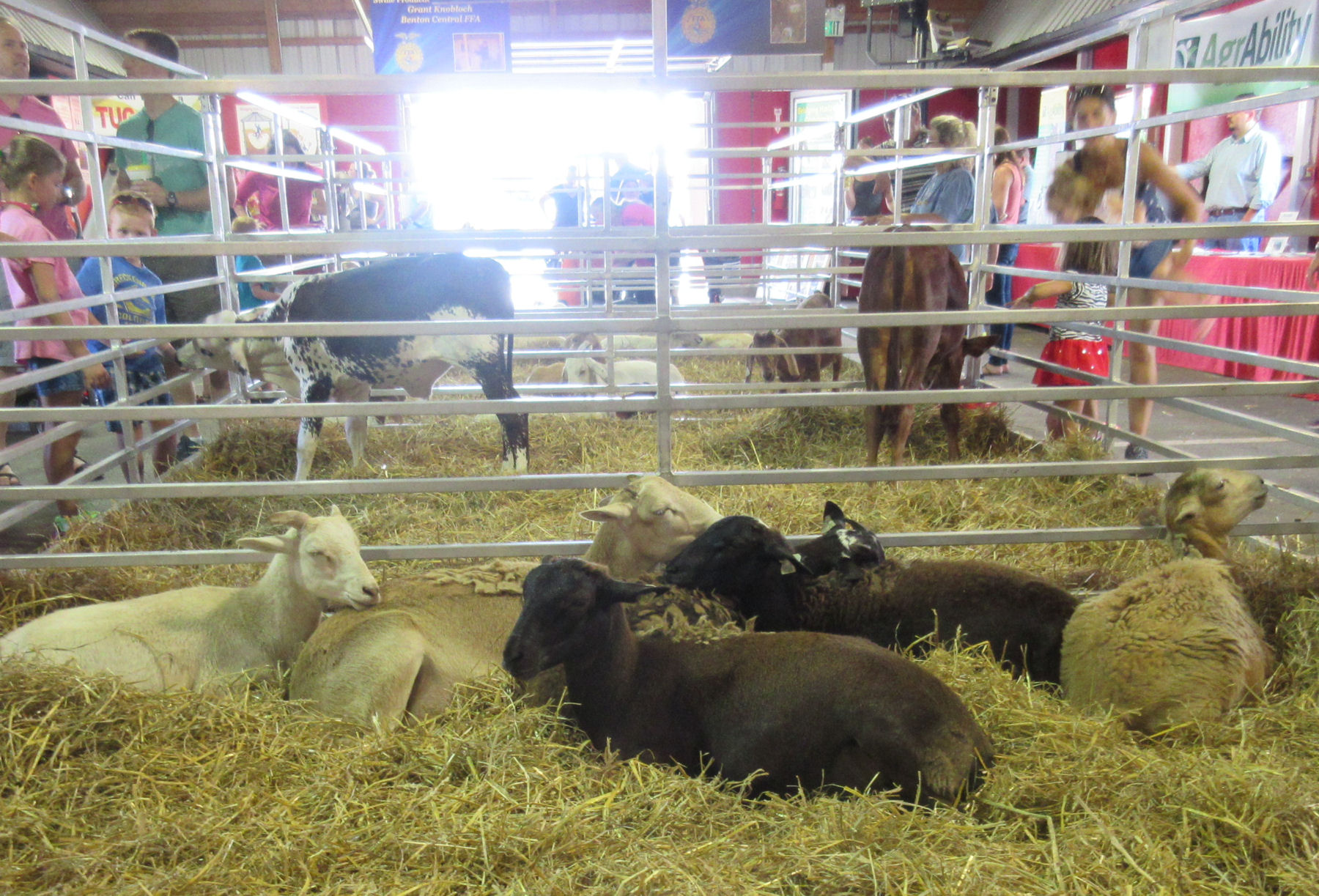 Cute baby farm animals! Preferably in well-ventilated barns! (The more ...