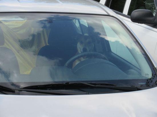 Doggie Driver!