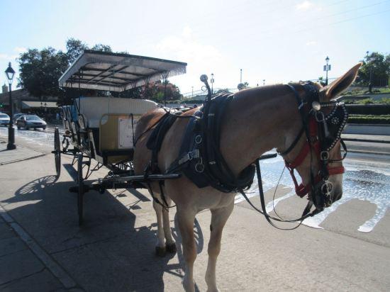 Horse-Drawn Buggy!