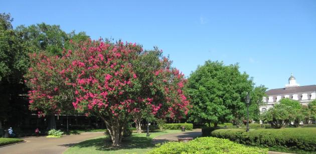 Jackson Trees!