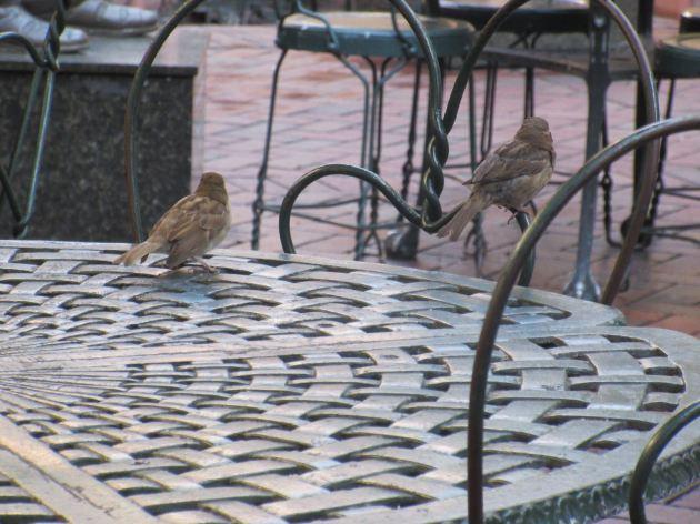 Beignet Birdies!