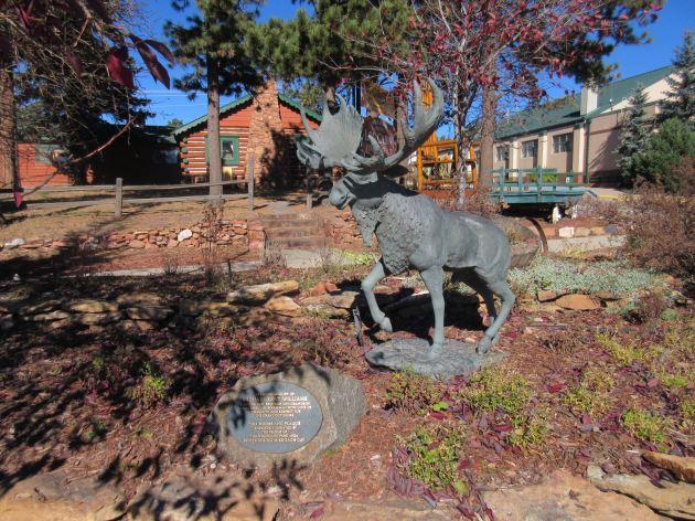 Woodland Park Moose!