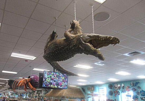 Flying Gator!