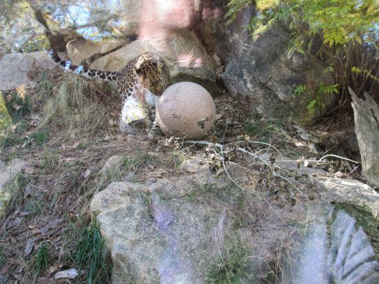 Snow Leopard Ball!