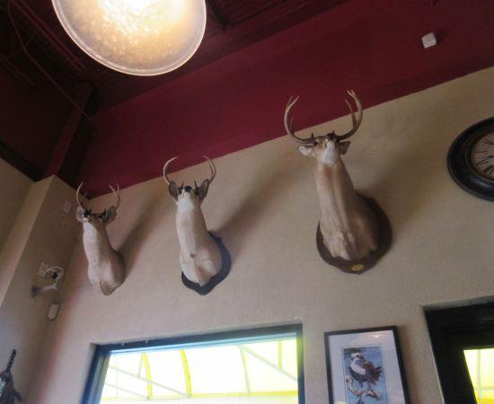 Deer Heads!