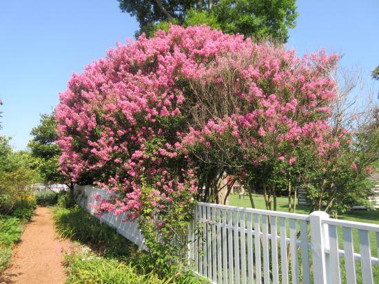 Pink Tree!
