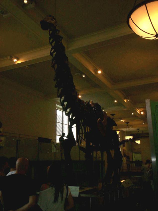 Fossil Longneck