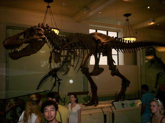 Fossil T-Rex!