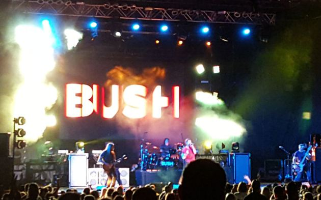 Bush!