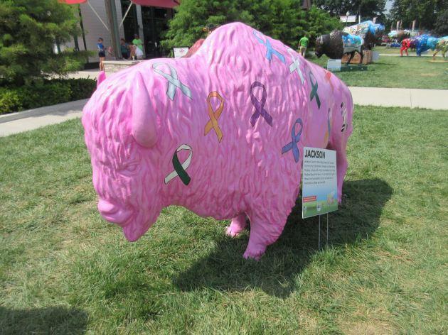 Pink Ribbon Bison!