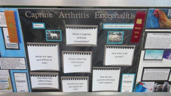 Caprine Arthritis Encephalitis!