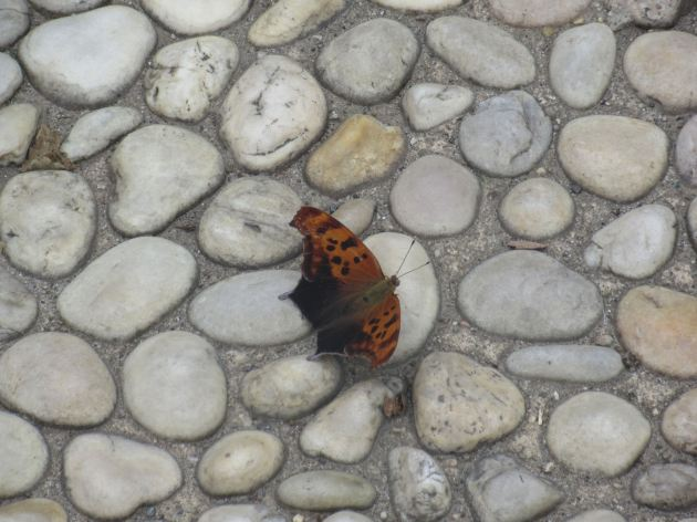 NYC butterfly!