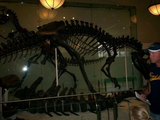 Fossil Abdomen!