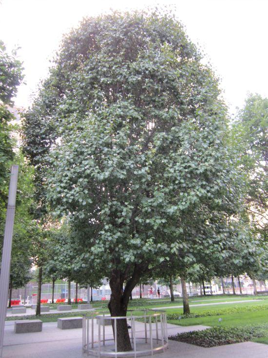 Survivor Tree.