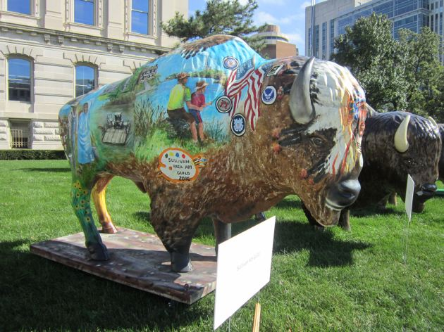Sullivan County Bison!