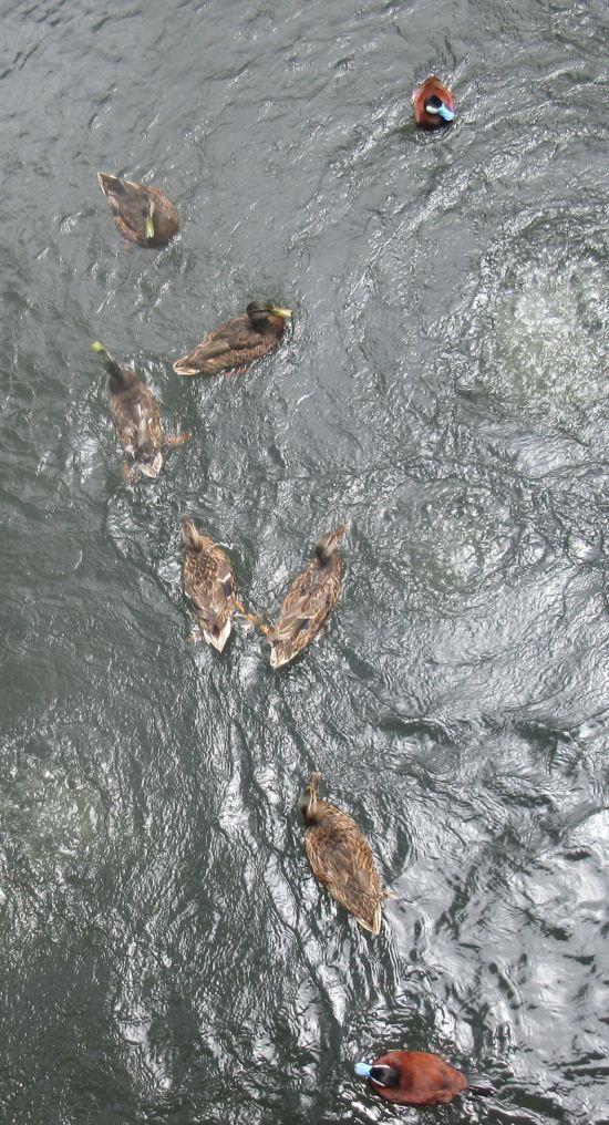 ducks below!