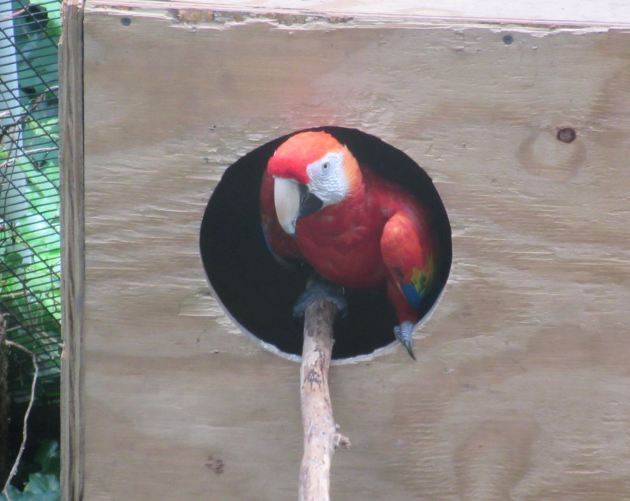 peeking parrot!