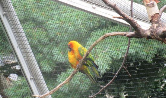 yellow green fat bird!