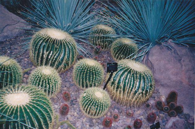 Meijer Gardens Cacti!