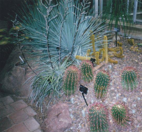 cactus assortment!