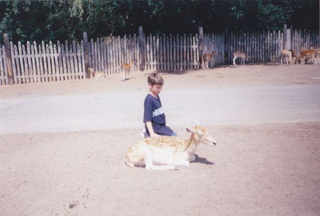 Deer Alone!