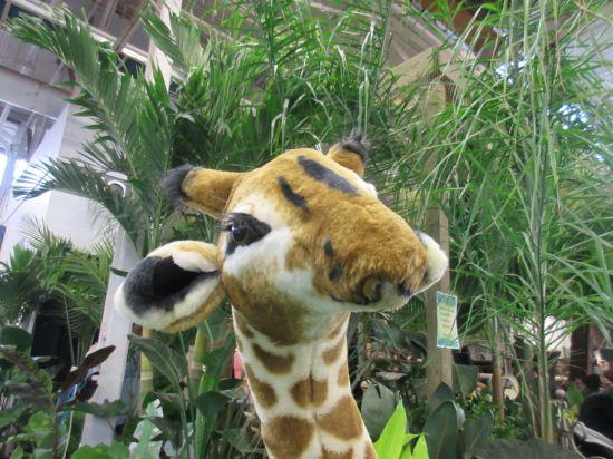 giraffe and greens!