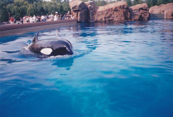 Killer Whale!