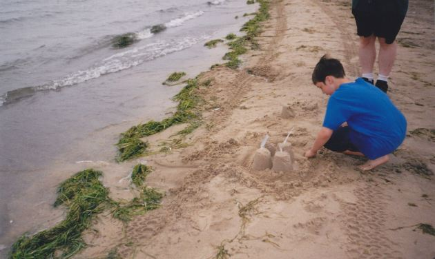 Sand Castles and Seaweed!